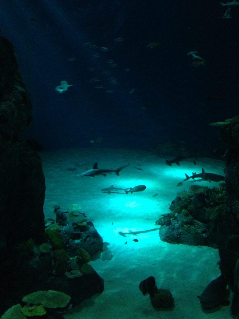 Aquarium_Haibecken